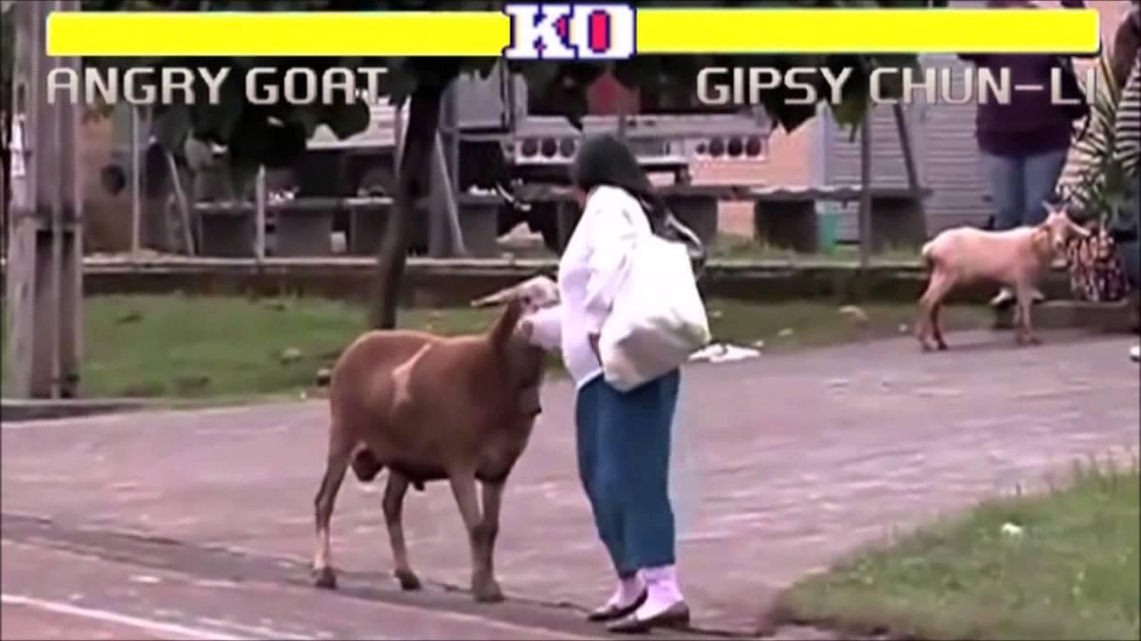 Ziege macht auf Street Fighter